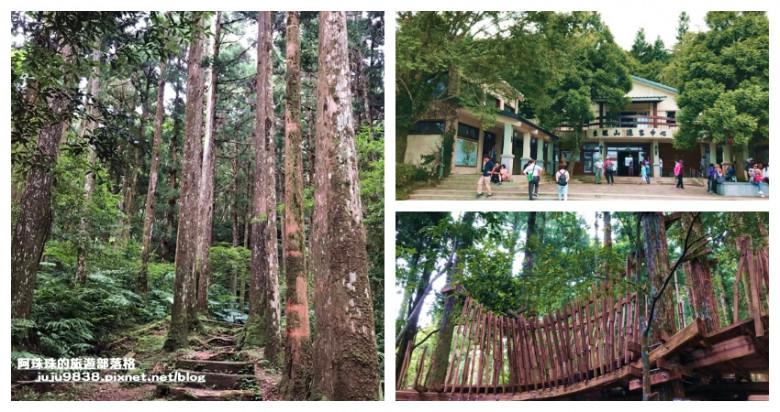 桃園市復興區 東眼山國家森林遊樂區49