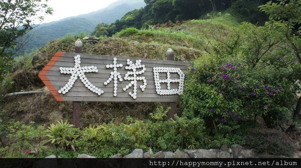 2015.06.14 陽明山竹子湖大梯田賞繡球花 (7).JPG