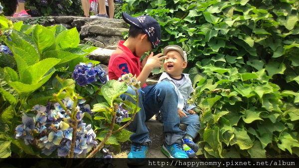 2015.06.14 陽明山竹子湖大梯田賞繡球花 (45).jpg