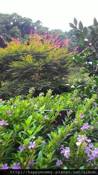 2015.06.14 陽明山竹子湖大梯田賞繡球花 (16).jpg