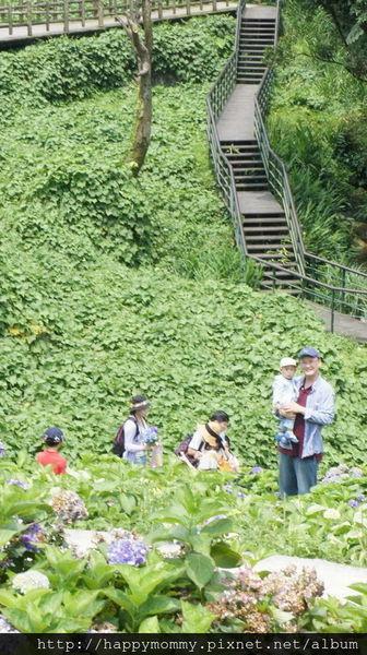 2015.06.14 陽明山竹子湖大梯田賞繡球花 (41).jpg