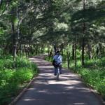 台東縣台東市 台東森林公園