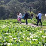 台北市北投區 清香園花圃