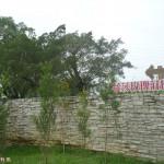雲林縣古坑鄉 蘿莎玫瑰莊園