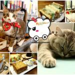 台北市中正區 MinouMinou Cafe