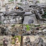 休閒旅遊/景點/主題樂園郭叔叔野生獼猴園