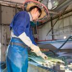 休閒旅遊/景點/觀光農場日耕農產-埔里茭白筍