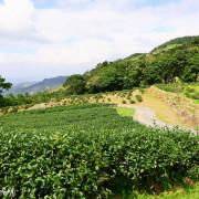 【新北-三峽區】台灣農林熊空茶園