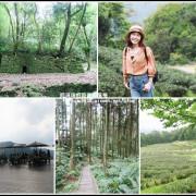 三峽。台灣農林熊空茶園。漫步海拔700m茶鄉柳杉林