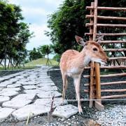 【宜蘭】冬山|斑比山丘 Bambi Land。親近小鹿互動零距離