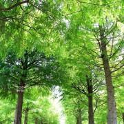 2020桃園蘆竹落羽松秘境,超親近迷你版水漾森林,慢拍水中迷幻綠影~
