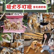 【台中景點】獵犬不打獵,金毛療癒團的黃金獵犬主題餐廳,喜歡阿金的一定要來,這裡有10+1隻狗兒在等你唷。天阿!曾經幻想著被黃金獵犬包圍,現在終於實現啦!