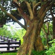 新北五股觀音山親子步道︱山景 海景 自然生態一次get的牛港稜步道
