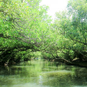 【台南旅遊】四草綠色隧道 帶著斗笠搭竹筏遊台版亞馬遜河 生態自然教室