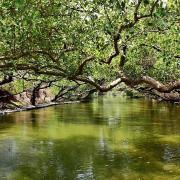 台版亞馬遜河:台南‧台江國家公園‧四草紅樹林綠色隧道