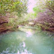 [台南]台灣版亞馬遜河,水上紅樹林綠色隧道,搭船遊台江/台南親子景點