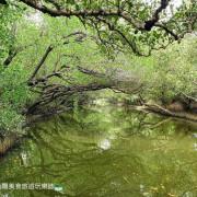 [遊]台南 不可錯過的自然美景 台灣袖珍版亞馬遜河 四草綠色隧道