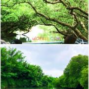 【四草綠色隧道】台灣迷你亞馬遜河,搭竹筏認識紅樹林生態!