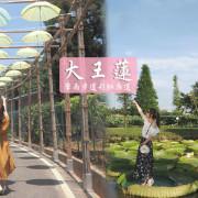 水蓮之鄉大王蓮 夏日限定漂浮之旅 免費入園 台版嚕嚕咪彩虹雨傘廊道 擎雨步道