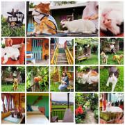 【宜蘭.三星】貓天空寵物民宿。這裡有十隻貓.兩隻狗.六隻雞。一個溫馨又溫暖的好地方。早餐下午茶超彭湃