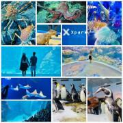 全台最美水族館【Xpark】園區必拍十大場景/最新科技打造奇幻五感體驗/走進萬花筒般的水母世界/來一趟療癒海底世界之旅