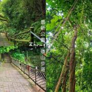 看樹在下雨︱中和景新公園環山步道