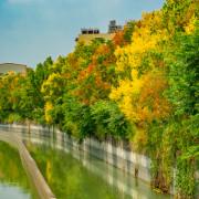 秋季限定!台南欒樹步道花兒盛開,來一趟與秋天的浪漫邂逅,走在山海圳綠道茄拔段上