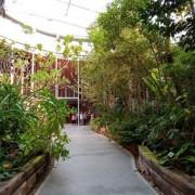台北典藏植物園~就算是雨天也是吸收芬多精好地方