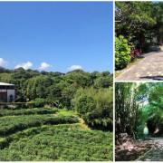 新北.石門-山林中的茶山步道,竟有著如日本嵐山的竹林秘境,還有登頂後的那一片180度海景,怎麼可以這麼美啦!