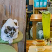 西子灣美食 / 哈瑪星美食 / 咖啡甜點都有點強的咖啡強