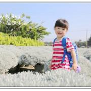 【彰化田尾景點】建華芙蓉園~雪白波波球。白色芙蓉草像是下雪一樣好夢幻!