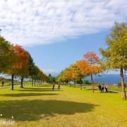 宜蘭景點【落羽松祕境】秋冬必去!絕美落羽松林,好夢幻好好拍!一日遊這樣玩!