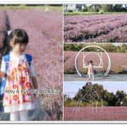 【楊梅仙草花節】楊梅紫色花田仙境~11/28登場。5.8公頃打造紫色仙境!