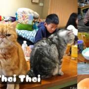 〖貓泰泰 Mao Thai Thai〗開業六年貓咪餐廳!體驗當一個專業貓奴.來者是客貓是主子.泰式料理อาหารไทย
