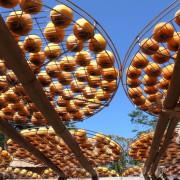旅行|新埔 味衛佳柿餅教育農園