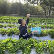 大湖草莓 │ 自採草莓 │ 瘋小莓 │大湖採草莓 │苗栗大湖