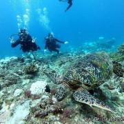 【小琉球潛水】居琉潛水背包客棧  來去小琉球潛水看海龜