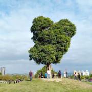 南興公園米奇樹。北屯萬坪親子公園,落羽松大道,台中網紅熱門拍照打卡景點 - 🍎 蘋果話日常🍎