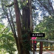 (♛台灣。賈桂林-我只想旅行){景點}心曠神怡的神木步道-拉拉山神木步道