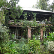 。新竹食記。6號花園.尖石山林內的忘憂花園