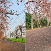 【彰化景點】埤頭木棉花道 全台最長的木棉花道 美拍打卡地標