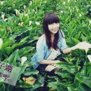 [2016 竹子湖海芋節] 芋見季節限定的美好 文末附竹子湖交通路線