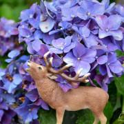 繡球花季Hydrangea。台北陽明山竹子湖高家繡球花田水車寮步道