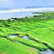 2021北海岸限定綠色奇蹟 老梅綠石槽長達二公里抹茶地毯超壯觀的 台灣極北點富貴角燈塔 北海岸必拍的熱門打卡點