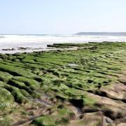 2020季節限定:新北石門老梅綠石槽,北海岸抹茶色地毯綠油油展開中~