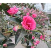 【宜蘭】充滿花香味白色城堡~香草菲菲