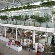 【宜蘭員山】香草菲菲芳香植物博物館-充滿花草香氛的博物館,還有buffet吃到飽