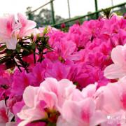 【台北-大安區】2016台大杜鵑花季