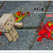 [賞花]【板南線西門站】青年公園。熱情似火の鳳凰木
