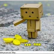 [賞花]【板南線西門站】青年公園。黃金雨の阿勃勒